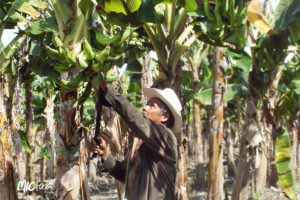 MIC Food Corporate Social Responsbility